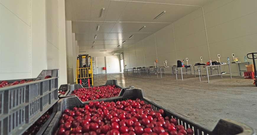 PRO-series-Landbouwgebouw-groentopslag-fruitopslag-bewaarloods-Frisomat