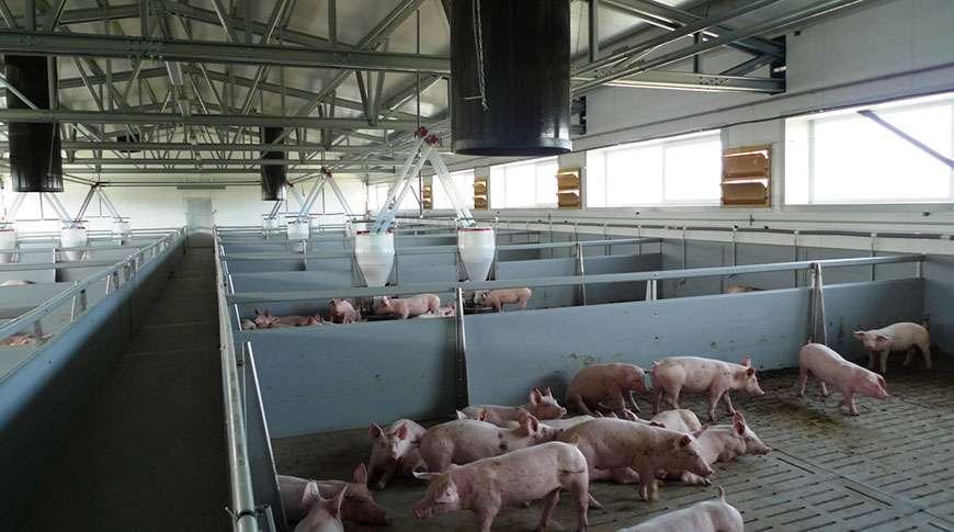 Case Study Pig Farm Agricultural Buildings Frisomat Nl